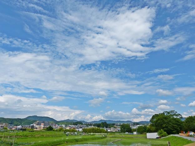 梅雨の晴れ間(2)