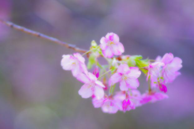 写真: 優しい春色