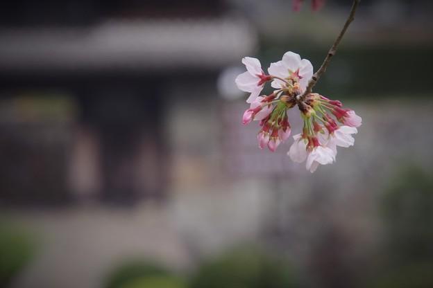 Photos: 櫓門!!