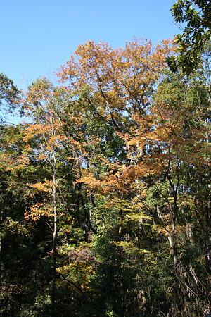 狭山丘陵の秋