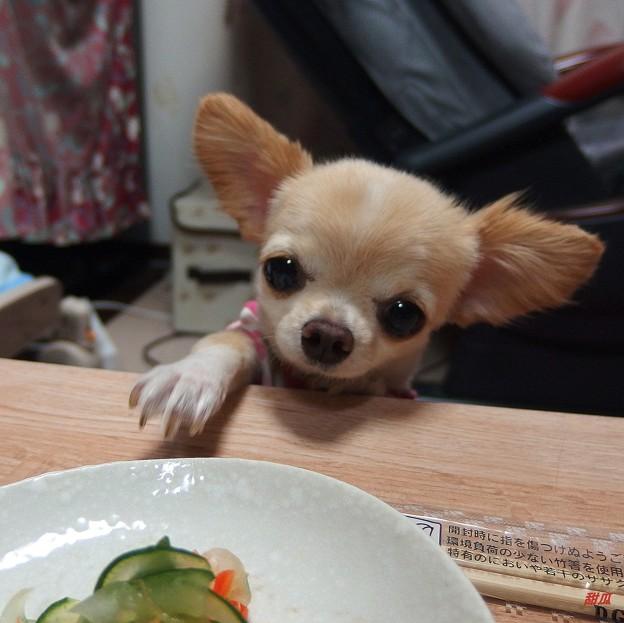 Photos: そのお皿、チェックします!・ ・ ・  食べてよし