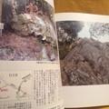 Photos: 茨城の奇岩・奇石2 常陽藝文 2013年4月 つくば市 日立市 ひたちなか市