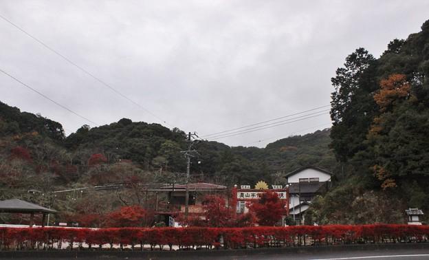 奥山の紅葉