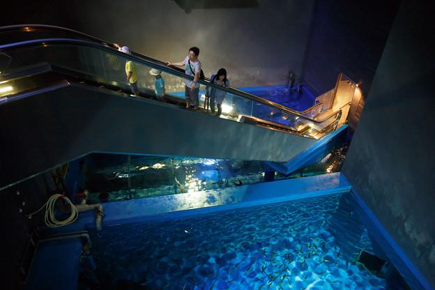 水槽の上のエスカレーター
