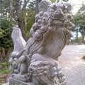 八雲神社・狛犬(8月2日)