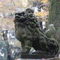 狛犬_神社 D7267