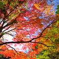 Photos: 光と紅彩