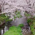 Photos: IMGP6685尾道市、栗原川の桜土手