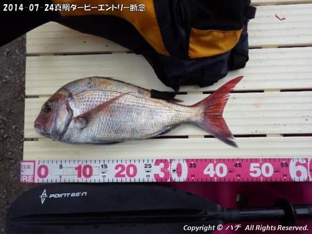 2014-07-24真鯛ダービーエントリー断念