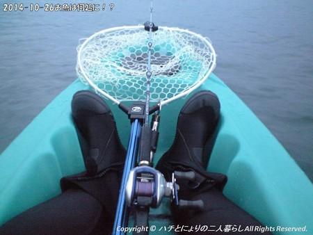 2014-10-26お魚は何処に!? (1)