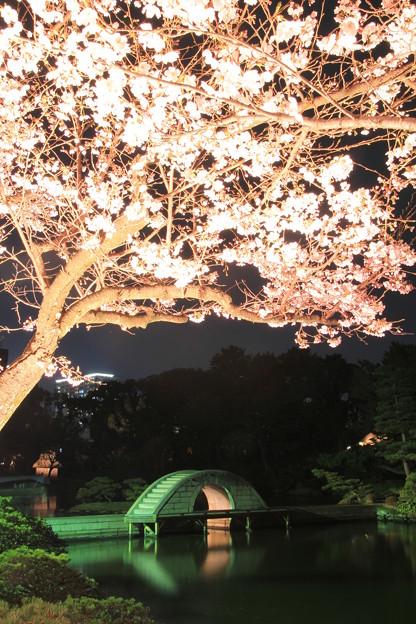 夜 桜#3