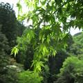 Photos: 新 緑#2