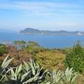 リュウゼツランと大島
