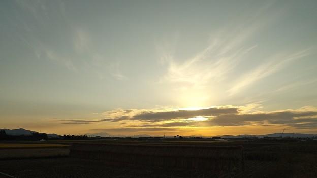 夕暮れの稲田