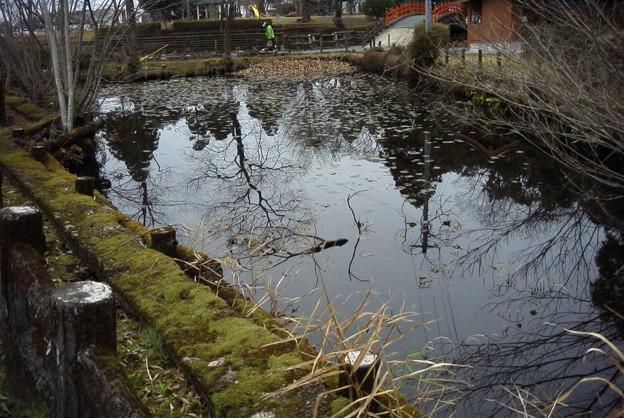 早水神社の池