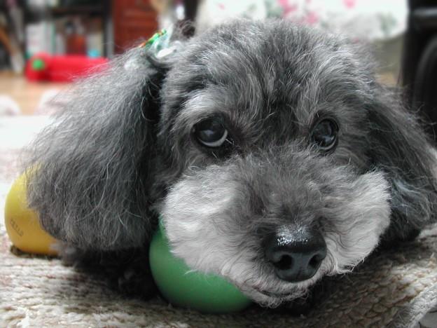 僕のボールだよ♪