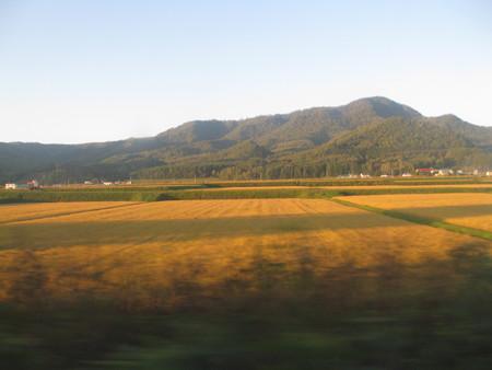 西日の田んぼ