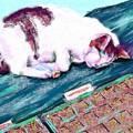 写真: 育苗とネコ