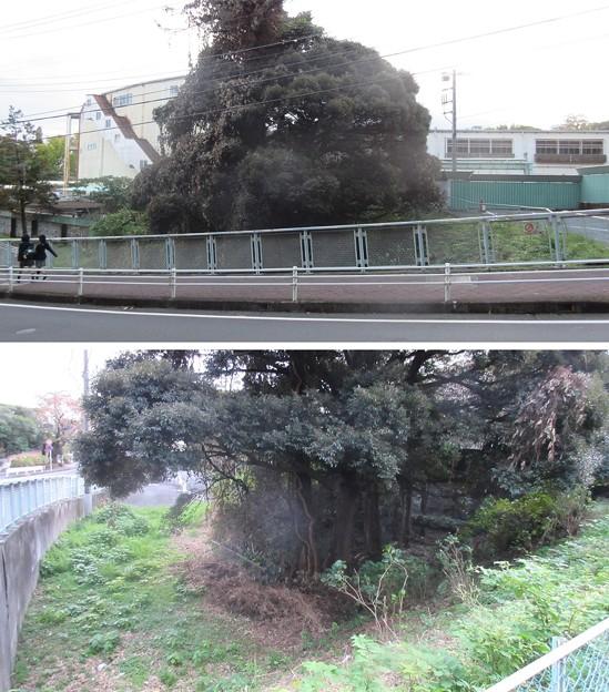 小田原古城 二の丸惣構堀(神奈川県)