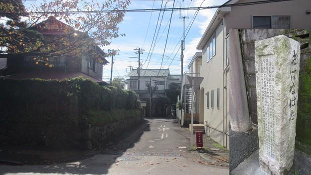 小田原城 御花畑(神奈川県)