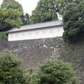 16.03.28.皇居乾通り(石垣の向こうは松の廊下