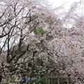16.03.28.六義園/柳沢松平家下屋敷(文京区本駒込)