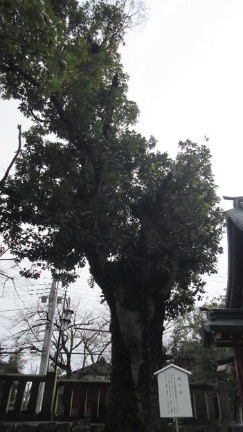 一之宮貫前神社(富岡市)蛙の木