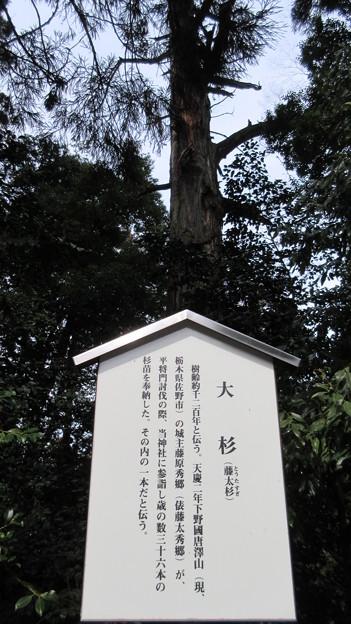 一之宮貫前神社(富岡市)藤太杉