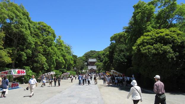 Photos: 鶴岡八幡宮(鎌倉市)