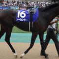 Photos: トーセンラー(3回東京2日 11R 第64回 農林水産省賞典 安田記念(GI)出走馬)