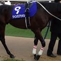 ウインバリアシオン(4回中山8日 10R 第59回グランプリ 有馬記念(GI)出走馬)