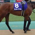 ミッキーアイル(3回東京2日 11R 第64回 農林水産省賞典 安田記念(GI)出走馬)