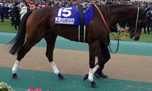 ショウナンパンドラ(5回東京9日 11R 第35回 ジャパンカップ(GI)出走馬)