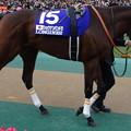 Photos: ショウナンパンドラ(5回東京9日 11R 第35回 ジャパンカップ(GI)出走馬)