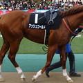 Photos: アッシュゴールド(5回東京9日 10R ウェルカムステークス(サラブレッド系3歳以上準オープン)出走馬)