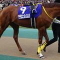 ダービーフィズ(5回東京9日 11R 第35回 ジャパンカップ(GI)出走馬)
