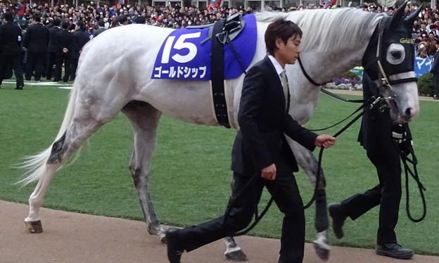 ゴールドシップ(5回中山8日 10R 第60回グランプリ 有馬記念(GI)出走馬)