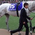 Photos: ゴールドシップ(5回中山8日 10R 第60回グランプリ 有馬記念(GI)出走馬)