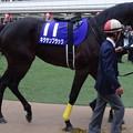 キタサンブラック(5回中山8日 10R 第60回グランプリ 有馬記念(GI)出走馬)
