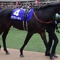 Photos: ラブリーデイ(5回中山8日 10R 第60回グランプリ 有馬記念(GI)出走馬)