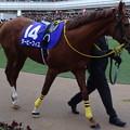 Photos: ダービーフィズ(5回中山8日 10R 第60回グランプリ 有馬記念(GI)出走馬)