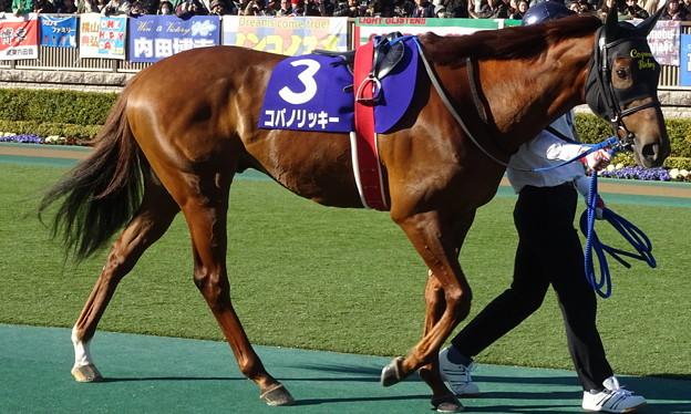 写真: コパノリッキー(1回東京8日 11R 第33回 フェブラリーステークス(GI)出走馬)