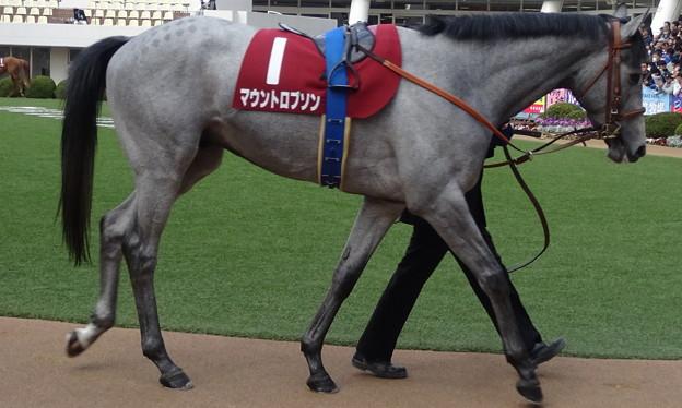 マウントロブソン(2回中山7日 11R 第65回 フジテレビ賞スプリングステークス(GII)出走馬)