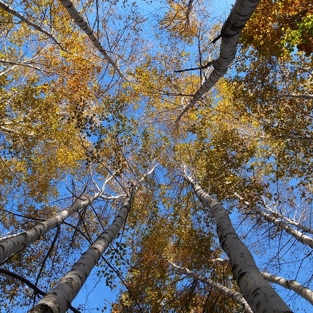Photos: 木々