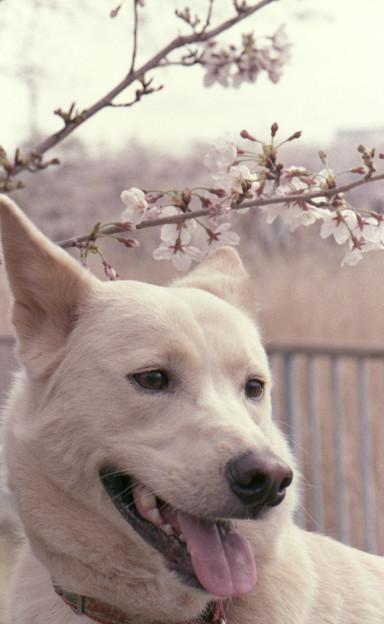 写真: 咲いた!