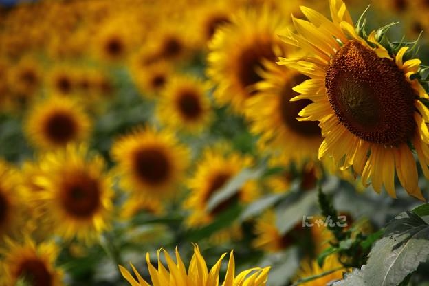 Photos: ~夏の日射しは~