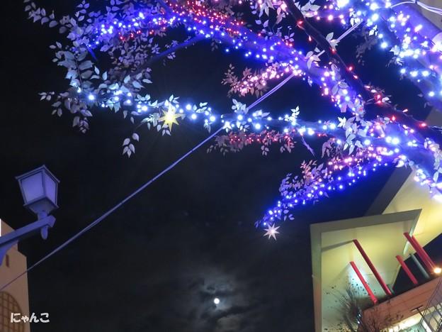 写真: ~fairy taleな夜~