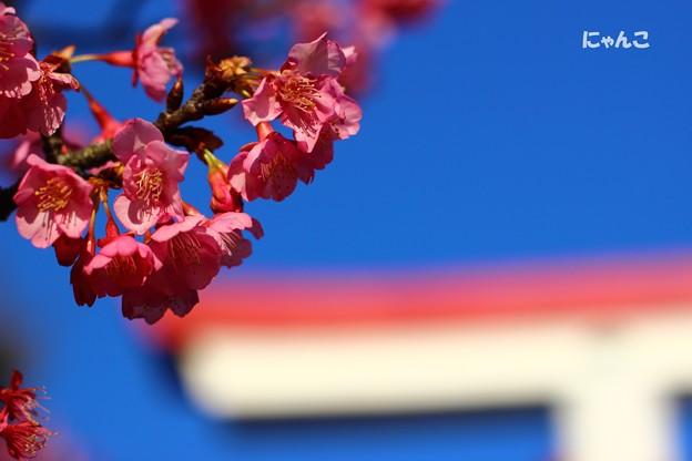 ~桜が咲いたよ~