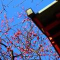 ~梅も咲いたよ~