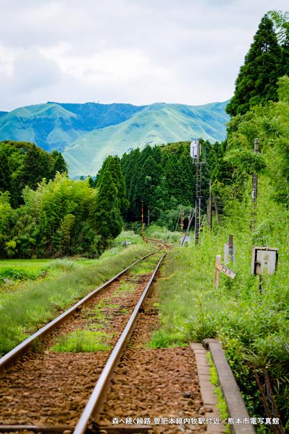 森へ続く線路。